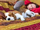 """3 em cada 4 cães dormem com seus """"pais"""""""