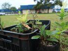 Prefeitura vai plantar 3 mil mudas de Guavira nos parques públicos de Dourados
