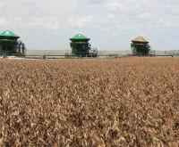 ... MS tem 12 cidades entre os maiores produtores do agronegócio brasileiro  ... 011ec7138b0