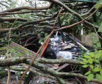 Árvore que era 'painel de fotos' cai e destrói veículo de moradora do Vilas Boas