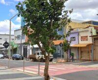 14 de julho recebe árvores de erva mate em nova fase do paisagismo