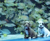 Cachorrinhos exploram aquário fechado ao público, e vídeo viraliza