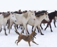 Cachorros e cavalos se comunicam com expressões faciais, aponta estudo