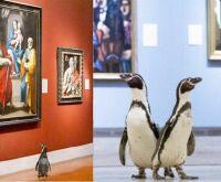 Sem visitantes na quarentena, pinguins passeiam por museu e vídeo viraliza