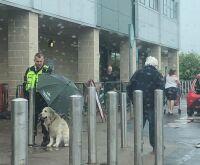 Segurança usa seu guarda-chuva para evitar que cão se molhe e foto viraliza