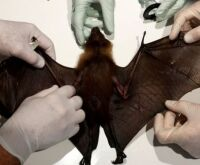Doenças que passam de animais para humanos aumentam sem proteção ao meio ambiente