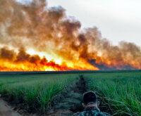 Fogo destrói Pantanal há uma semana e PMA diz que incêndios são criminosos