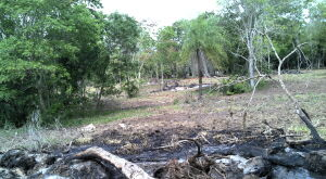 Mulher de 58 anos é multada em R$ 3,700 por desmatamento e queimada