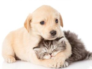 Feira de adoção de cães e gatos acontece neste sábado