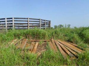 Homem é autuado em R$ 2 mil por armazenamento ilegal de madeira