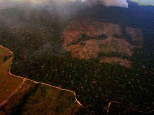 Emissões de gases estufa crescem; desmatamento é responsável
