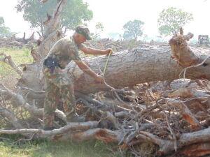 PMA autua fazendeiro em R$ 1,5 milhão por desmatamento ilegal de 1,5 mil hectares de vegetação nativ