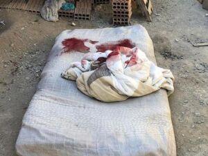 ovem dormia quando foi morto a tiros