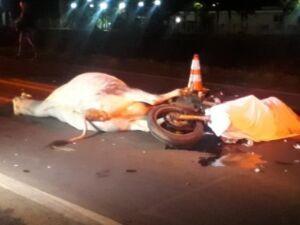 Motociclista e animal morreram no local do acidente.