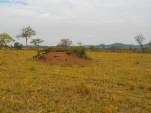 Usando tecnologia de satélite PMA autua paulista em R$ 83 mil por desmatamento