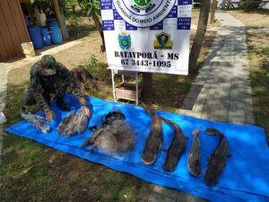 PMA flagrou três por pesca predatória no rio Ivinhema