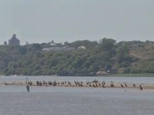 ilha que surgiu com a seca no rio Paraguai em MS