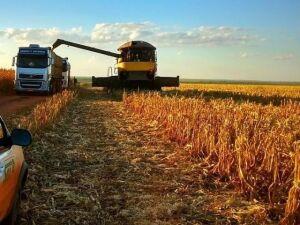 Colheita do milho safrinha em Mato Grosso do Sul