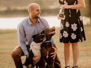 Os cães de Taylor também participaram da sua sessão de fotos de grávida