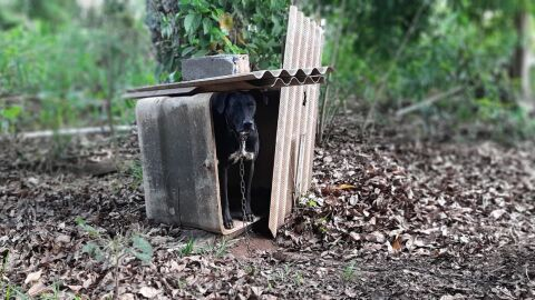 Homem que mantinha cachorro em situação precária foi preso por maus-tratos