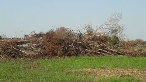 Homem leva multa de R$ 20 mil por desmatamento ilegal em Nova Alvorada do Sul