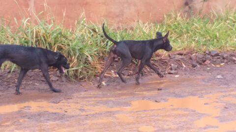Vídeo: câmeras flagram momento em que cães a solta matam 10 gatos na Capital