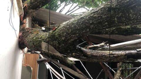 Temporal: pelo menos 9 cidades devem decretar situação de emergência em MS