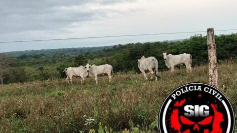 Fazendeira é presa e gerente de sertanejo famoso é procurado por furtar gado em MS