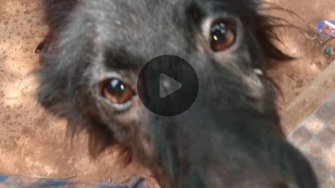 Vídeo: cãozinho é resgatado, sem comida, sem água e com paralisia em Kitnet de estudante