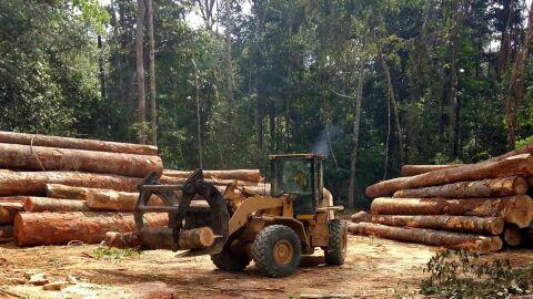 Desmate na Amazônia é o maior desde 2008