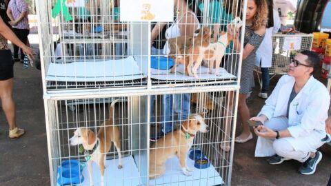 1ª feira de doação do CZZ terá 35 animais em busca de um lar