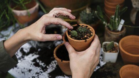 Como cuidar bem das suas plantinhas em casa