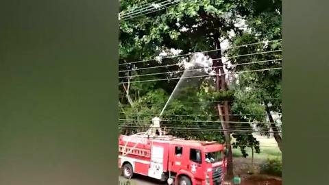 """Procedimento maldoso de Bombeiros para """"salvar"""" gato causa revolta"""