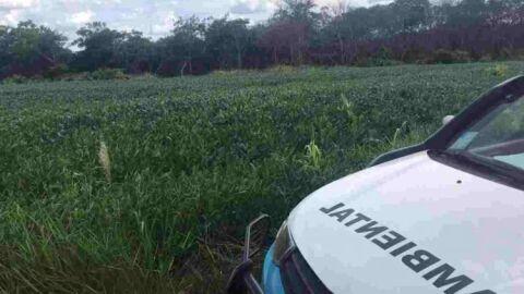 Fazendeira desmata área em Bonito e leva multa de R$ 18 mil