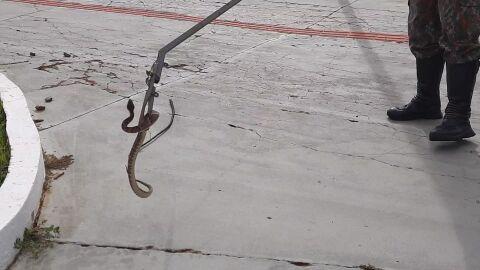 Vídeo: Cobra jararaca surpreende moradores em praça pública de MS