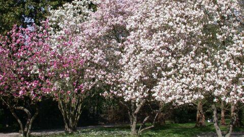 Projeto Via Verde realiza o plantio de 5 mil novas árvores na Capital