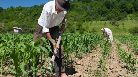 Fazendeiros tem vagas de emprego no campo com salário de até R$ 3 mil