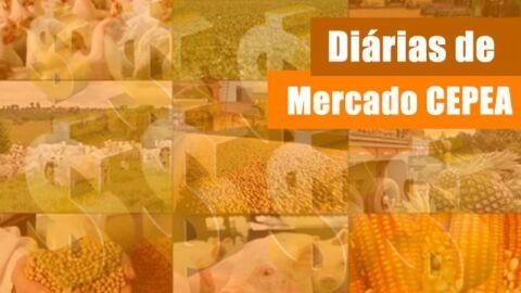 ARROZ/CEPEA: Negociações seguem pontuais; colheita ultrapassa os 80% no RS