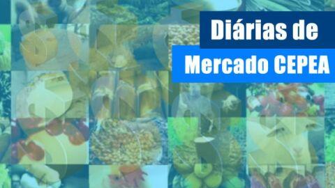 ALGODÃO/CEPEA: Vendedor firme garante reação nos preços