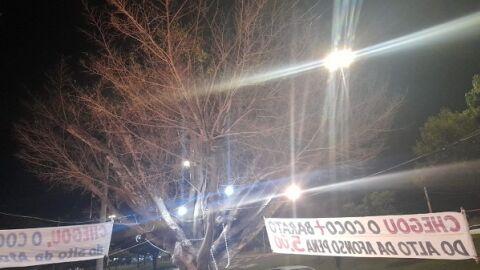Árvore é envenenada nos altos da Afonso Pena por inveja de sucesso na venda de côcos