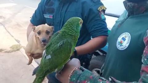 Vídeo: PMA resgata animais e multa mãe de adolescente denunciado por Luisa Mell