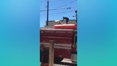 Vídeo: cabrito sobe no telhado de casas e dá trabalho para Bombeiros