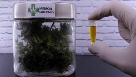 Relator apresenta parecer sobre medicamentos à base de Cannabis nesta terça-feira
