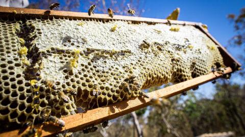 Transporte de colmeias é tema de nova live da Maratona de Inovação na Apicultura