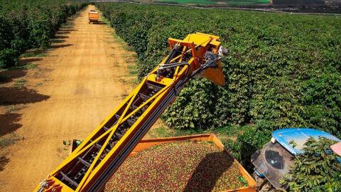 CNA e Federações debatem ferramentas de gestão de risco à cafeicultura