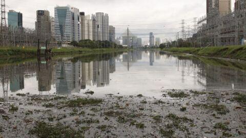 Registro de peixes no Rio Pinheiros cria esperança, diz especialista