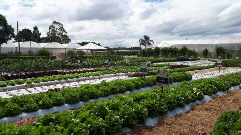 Prefeitura define regras para compra de alimentos da agricultura familiar