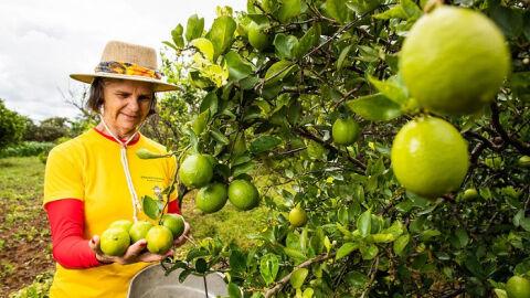 CNA realiza capacitação com foco na exportação de frutas e produtos derivados