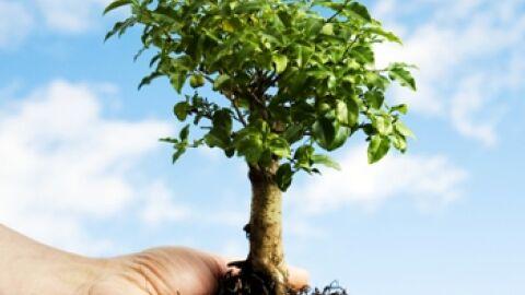 """Meio Ambiente recria projeto """"Adote Uma Árvore"""""""