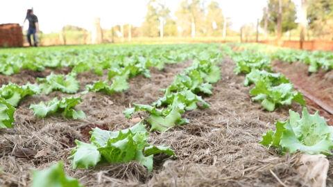 Diagnóstico de solo e boas práticas de conservação são recomendações prioritárias do Senar/MS